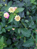 何の花??_f0061394_15481664.jpg