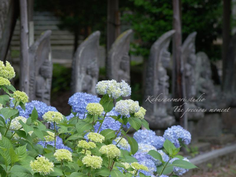 09/7/2  梅雨の季節の一つの楽しみ_c0137403_16255996.jpg