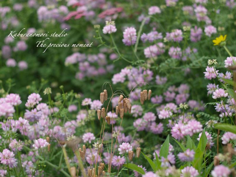 09/7/2  梅雨の季節の一つの楽しみ_c0137403_16275326.jpg