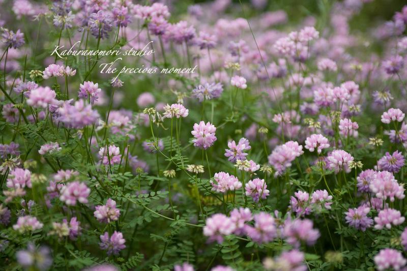 09/7/2  梅雨の季節の一つの楽しみ_c0137403_16291065.jpg