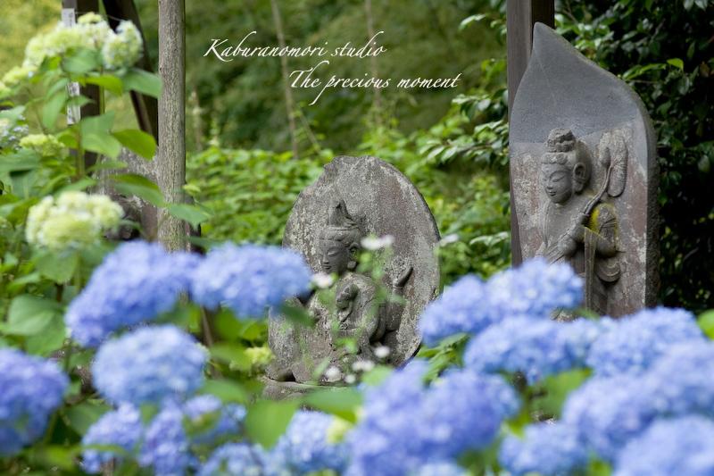 09/7/2  梅雨の季節の一つの楽しみ_c0137403_16535679.jpg