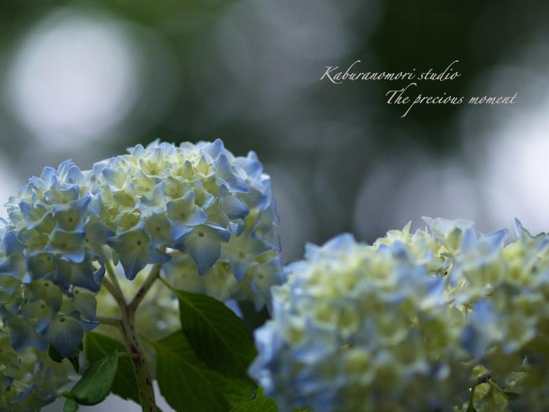 09/7/2  梅雨の季節の一つの楽しみ_c0137403_16561377.jpg