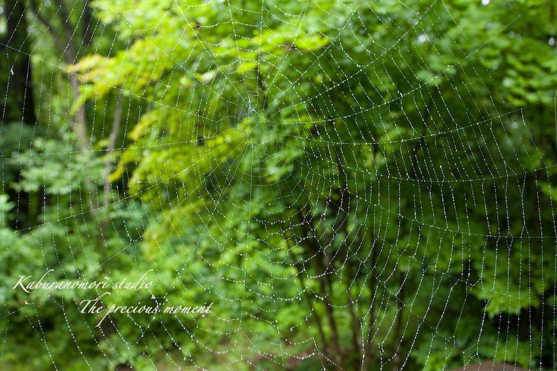 09/7/2  梅雨の季節の一つの楽しみ_c0137403_1763111.jpg