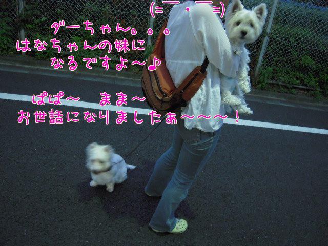 f0039907_1646251.jpg