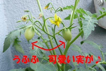 b0077721_15354795.jpg