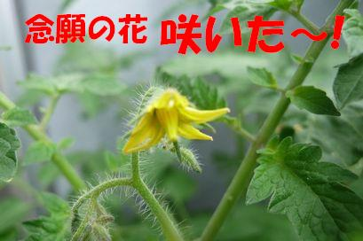 b0077721_15581425.jpg