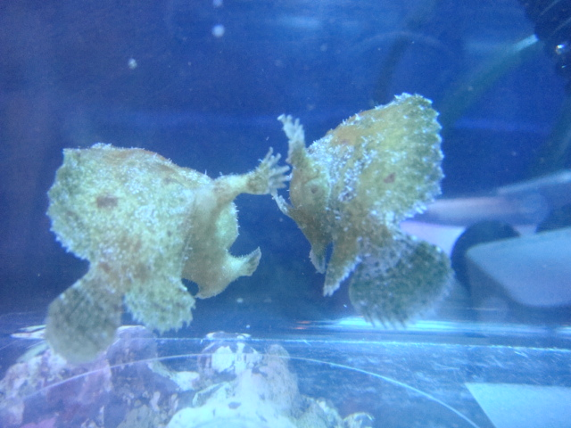 熱帯魚・金魚・水草・海水魚・サンゴ_f0189122_11564812.jpg
