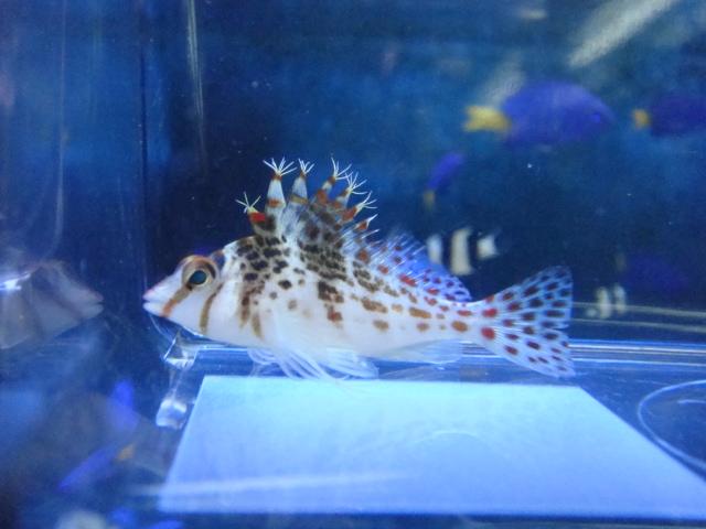熱帯魚・金魚・水草・海水魚・サンゴ_f0189122_14171342.jpg