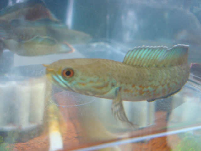 熱帯魚・金魚・水草・海水魚・サンゴ_f0189122_1440597.jpg