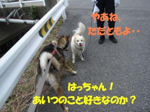 f0143123_21322542.jpg