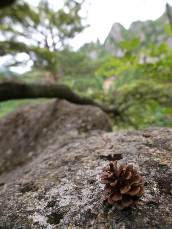 小川山 2009 (21) 水晶へのアプローチはカモシカ登山道?!_a0016346_12355943.jpg