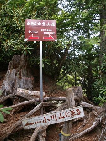 小川山 2009 (21) 水晶へのアプローチはカモシカ登山道?!_a0016346_12373277.jpg