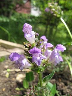 紫色の花_a0129867_221318100.jpg