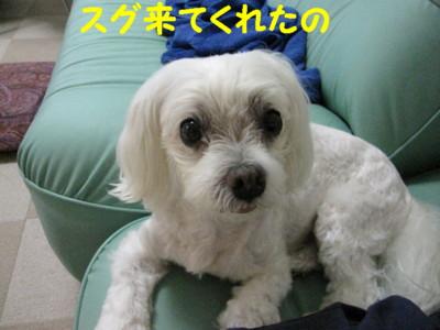 f0145192_2012517.jpg