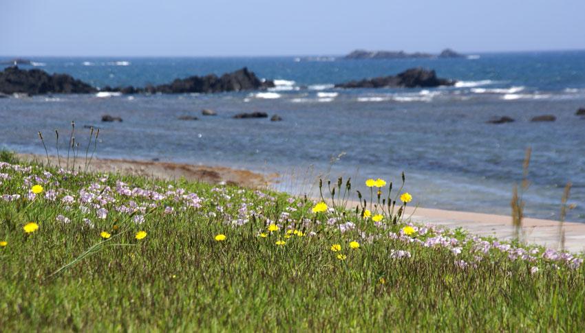 西海岸_a0136293_16465125.jpg