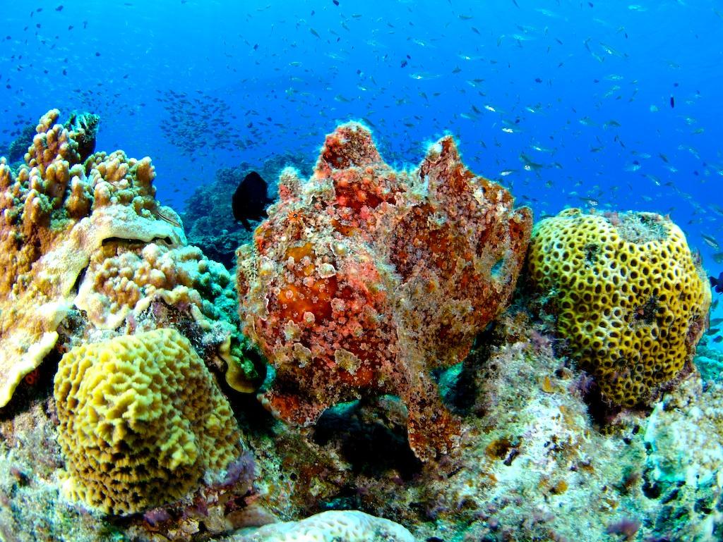 壁纸 海底 海底世界 海洋馆 水族馆 桌面 1024_769