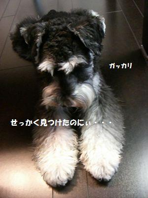 f0197317_6321328.jpg