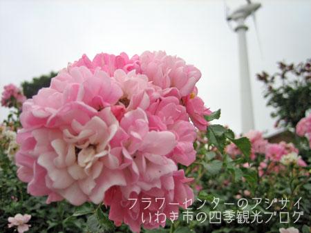 f0105342_1785019.jpg