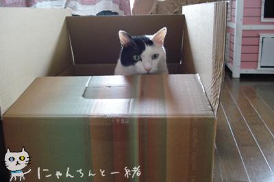 替えダンボール箱、再びお釈迦_e0031853_1144941.jpg