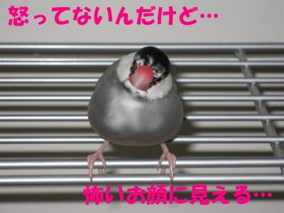 b0158061_2239217.jpg