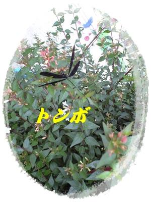 b0149071_20485725.jpg