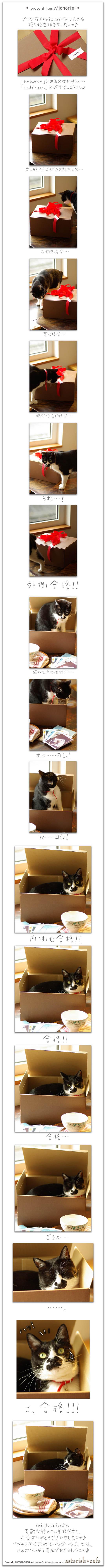 足袋之介ニャ!Vol.9 ~猫まったりな贈り物♪ _a0136878_16222633.jpg