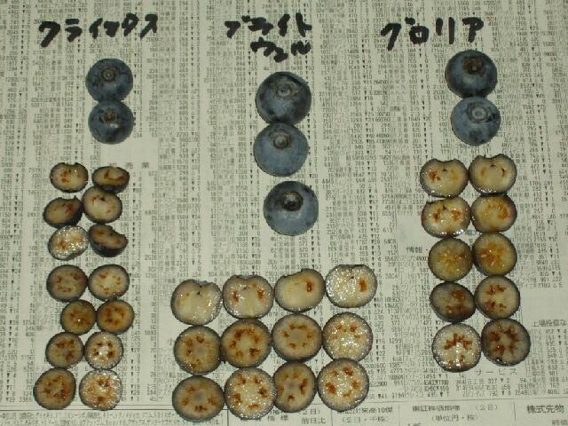 ラビットアイ系の果肉の色と種_f0018078_1624971.jpg