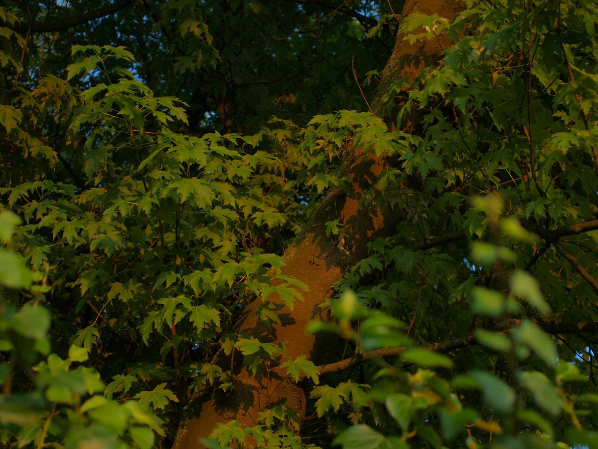 暮れない夏の夜_b0148617_0513380.jpg