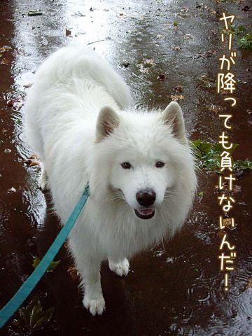 雨ニモ負ケズ_c0062832_15162551.jpg