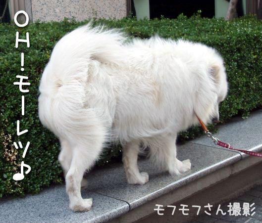 雨ニモ負ケズ_c0062832_15163158.jpg