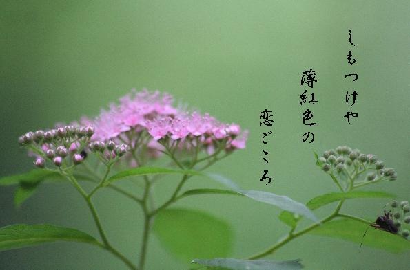 b0173244_20511563.jpg