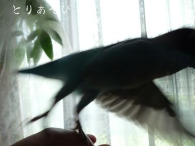 怪鳥襲撃す!_e0147757_23481712.jpg