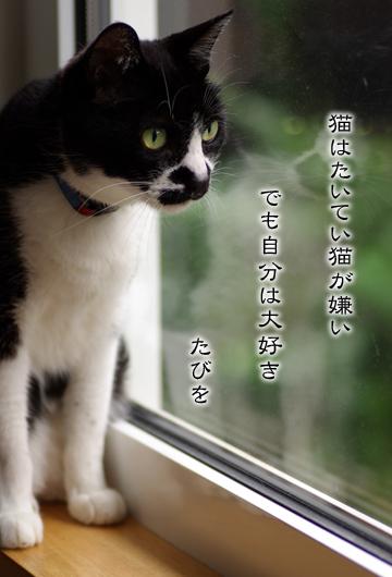 たびを 今日の一句 Vol.15 _a0136878_0404110.jpg