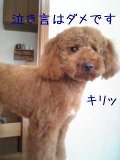 b0151505_12545072.jpg