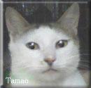 ※※藤枝市 猫虐待犯へ厳罰を求める署名のお願い※※_e0144012_1130419.jpg