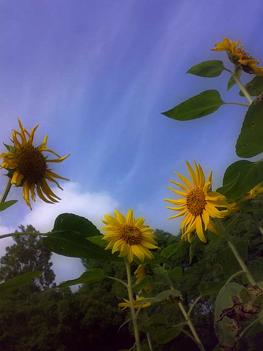 夏を感じる今日この頃_e0084214_2344191.jpg