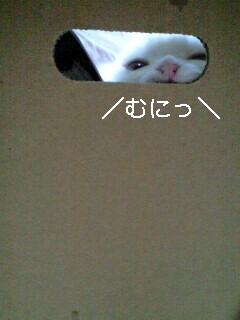 c0047024_3394847.jpg
