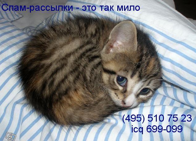 よりぬき ロシアからのおもしろ迷惑メール_b0054727_11301260.jpg