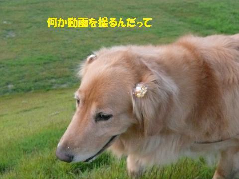 f0114128_1958771.jpg
