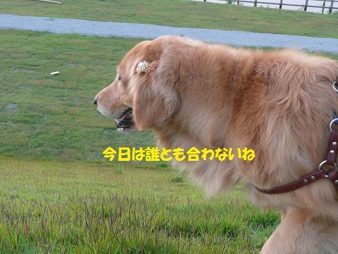 f0114128_2002648.jpg