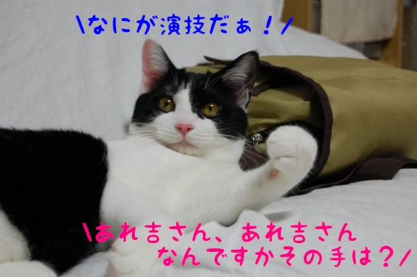 c0181639_11202799.jpg