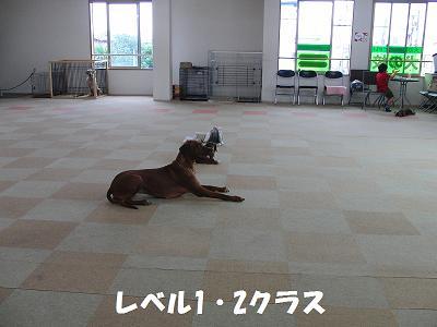 f0186040_20241287.jpg