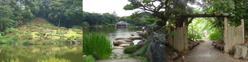 庭園と芭蕉(江東区)_d0132289_13482734.jpg