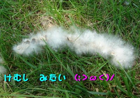 f0195891_17112756.jpg