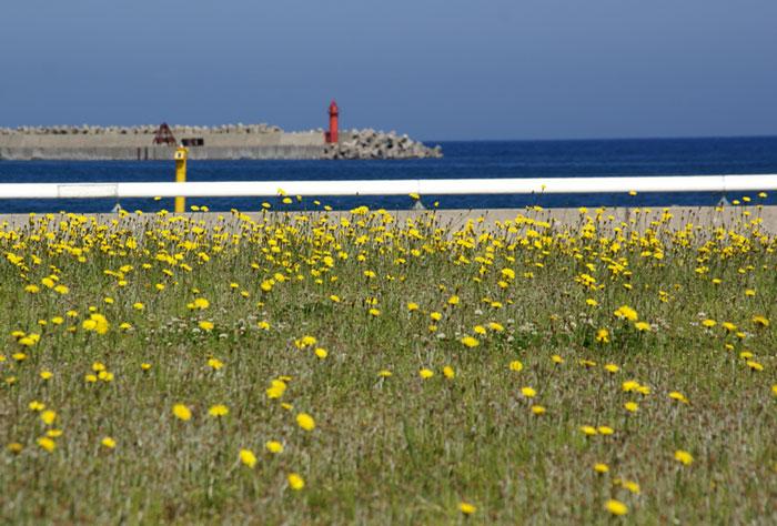 津軽の西海岸風景です_a0136293_1524772.jpg