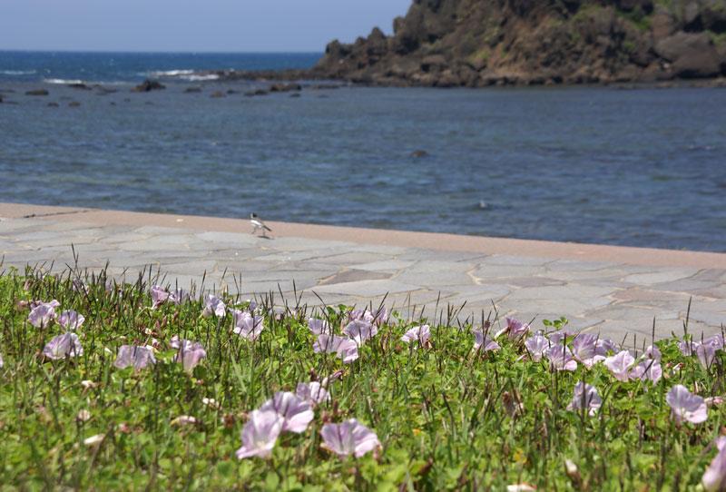 津軽の西海岸風景です_a0136293_157429.jpg
