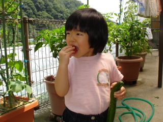 マコちゃん農園、豊作です!トマトがぶり!_e0166301_15462216.jpg