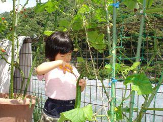 マコちゃん農園、豊作です!トマトがぶり!_e0166301_15485891.jpg