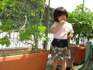 マコちゃん農園、豊作です!トマトがぶり!_e0166301_15495051.jpg
