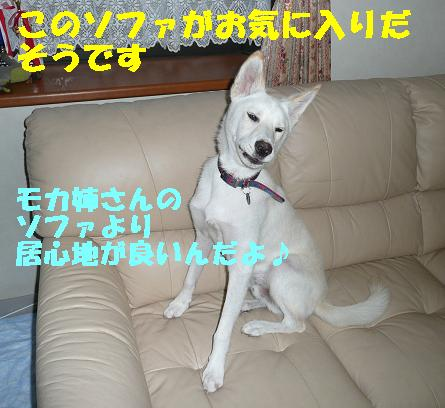f0121712_17104752.jpg